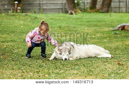 The little baby girl playing with dog against green grass in park