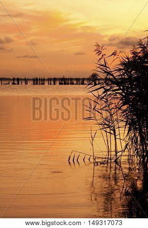 Island of Ruegen, Germany, Reeds at Jasmunder Bodden lagoon in sunset