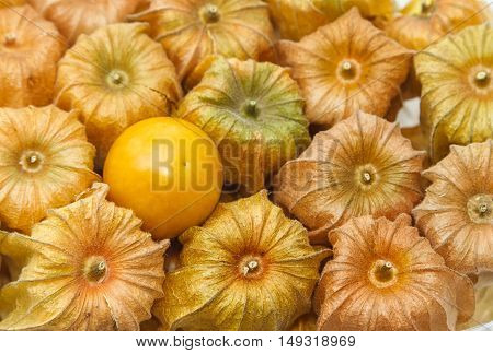 Healthy fresh Cape Gooseberry fruit use as background