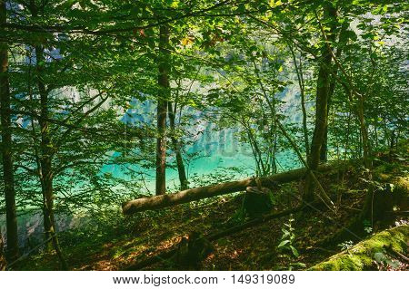 Colorful water of Obersee lake through thicket on sunny day Germany