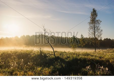 Sunrise over foggy meadow autumn morning landscape