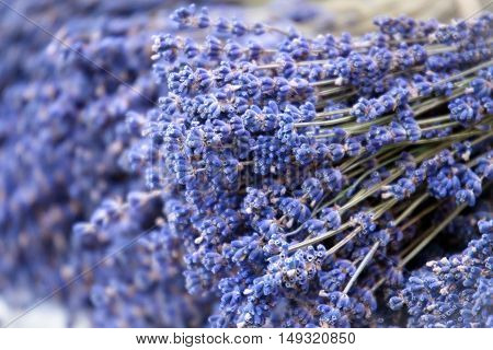Fresh lavender handmade bunches. A natural background