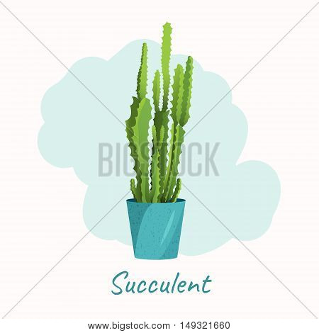 Succulent in a flower pot on white background. Home interior floral design elements. Green house plants flowers and nature concept. Tropical exotic botany collection.
