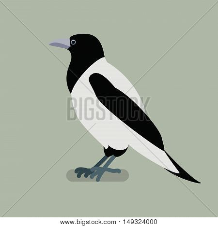 Crow bird on a branch. Isolated vector illustration of a flat
