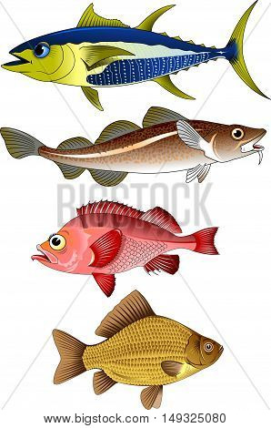 collection of commercial fish on a white backgroundvector and illustration