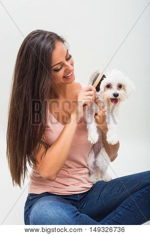 Happy female maltese is combing beautiful young woman.
