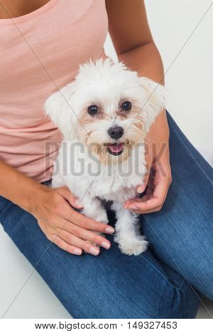 Cute little female maltese is sitting on lap of a woman and looking at camera.