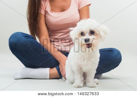 Cute little female maltese is sitting in front of her owner.