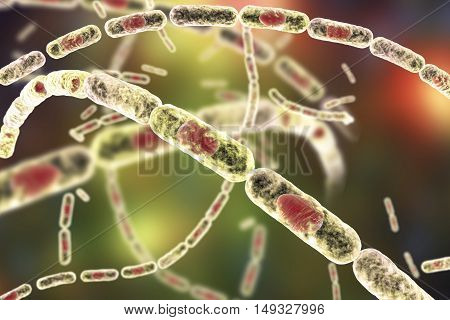 Bacillus anthracis, gram-positive spore forming bacteria which cause anthrax and are used as biological weapon, 3D illustration