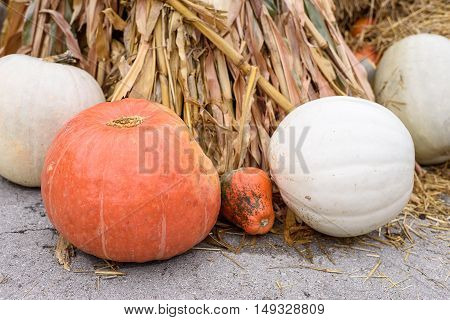 Pile of orange and white colored pumpkins and gourds in Moldova