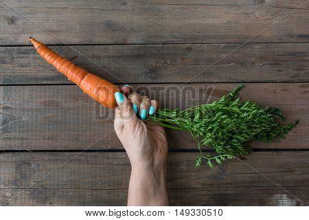 Fresh Garden Carrots In The Hand