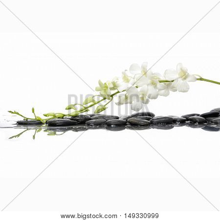 White branch orchid with wet black stones background
