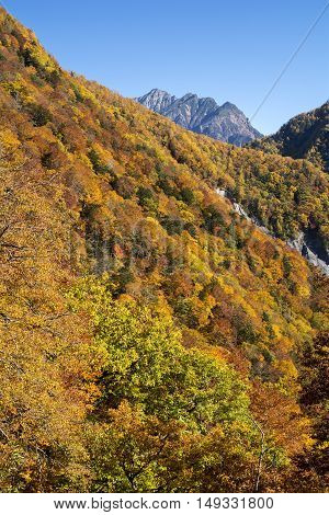 Autumn color forest and mount Myoujin under blue sky in vertical compisition