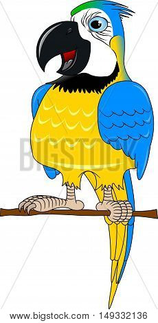 Cartoon african Macaw birds. Vector cartoon african Macaw birds made in flat style