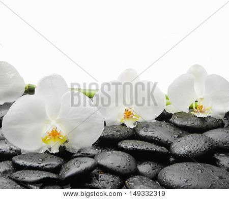 White orchid blossom with wet black stones background