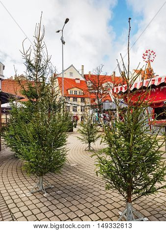 Riga, Latvia - December 25, 2015: Livu square with Christmas trees in the old town in Riga of Latvia. The Livu square was established in 1950