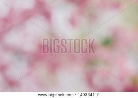 Abstract background with defocused of beautiful pink cherry blossom