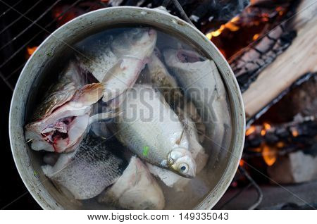 Freshly cought fish cooking in a big pot on open fire. Pieces of fish are shown close-up. Some fish put in pan entirely. Burning wood on the background