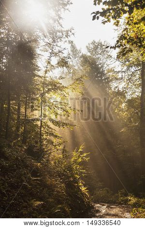 Fantastic foggy forest with a broken road in the sunlight. Sun beams through tree. Dramatic colorful scenery. Carpathian Mountains Mount Parashka. Ukraine Europe. Beauty world.