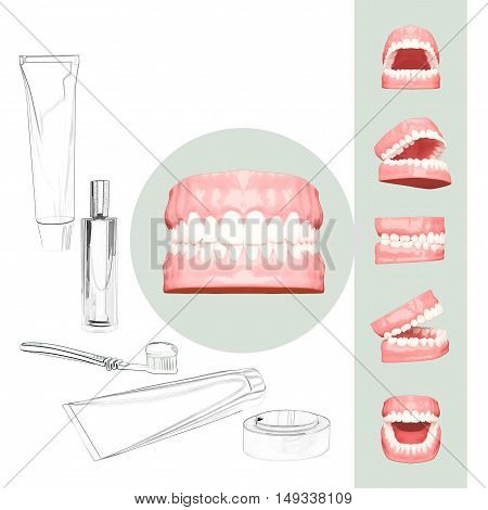 3D teeth or tooth illustration perspective views in mouth. 3D illustration
