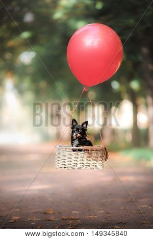 Flying Dog On The Balloon In The Basket . Little Pet On The Nature In The Park