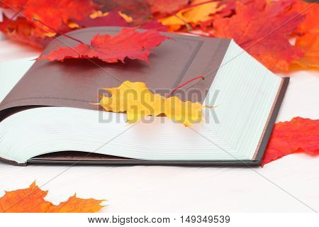 Open book with autumn red maple leaves
