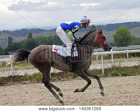 Before horse racing,jockey on arabian horse in Pyatigorsk.
