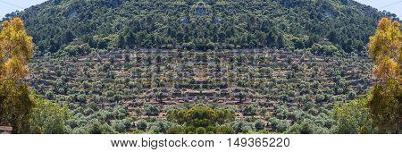 Scenics Cultivated terraced fields in Banyalbufar on the island of Mallorca Spain.