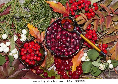 autumn berries, cranberry, guelder rose and Rowan on the background of autumn leaves and fruits