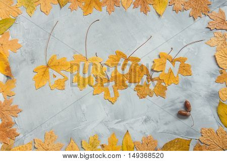 Lettering autumn on maple leaves with leaf frame acorns on a concrete background