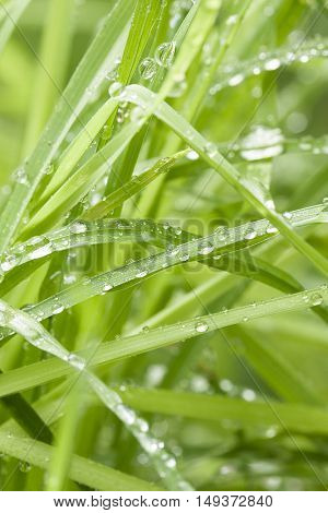background grass with dew with shallow depth of field
