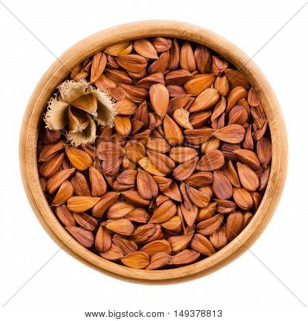 Shelled beechnuts in a wooden bowl on white background, also called mast, with a burr. Brown seeds of European beech, also common beech, Fagus sylvatica. Isolated macro food photo close up from above.