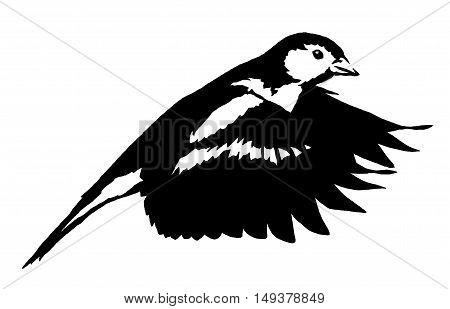 black and white paint draw tit bird illustration