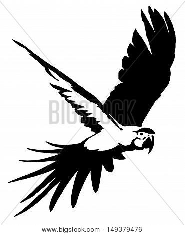 black and white paint draw parrot bird illustration