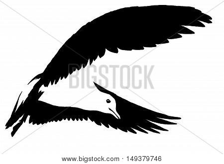 black and white paint draw Seagull illustration