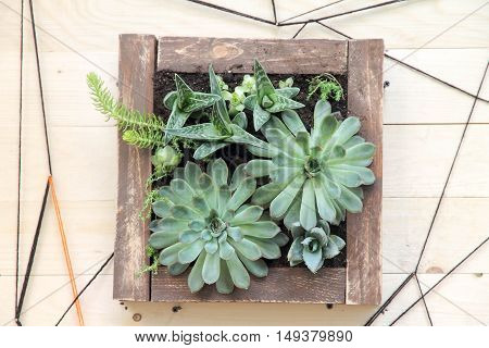 square pot with succulents on wooden platform
