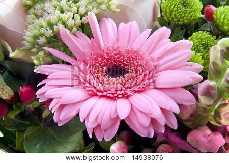 Gebera Bouquet