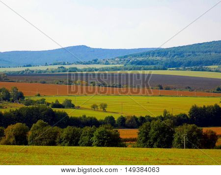 Fields and deciduous forest during sunny day