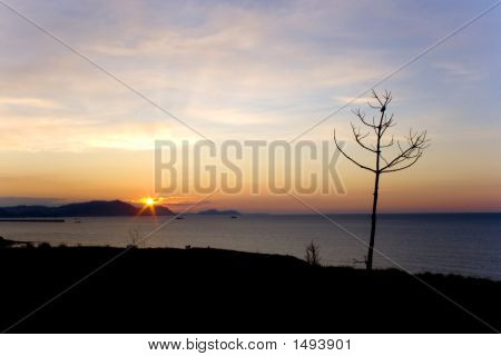Picture or Photo of A solitary pine say bye to another day