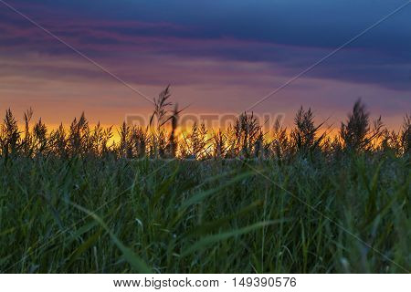 Amazing Sunset With Grass Silhouettes