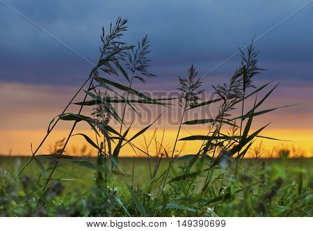 Windy sunset in the field with swaying grass and amazing sunset colors