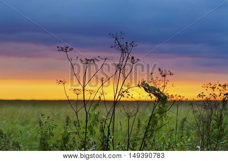 Autumn Grass In Sunset