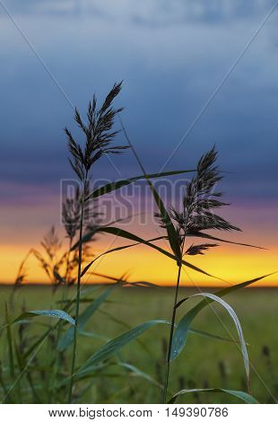 Two Blades Of Grass At Sunset