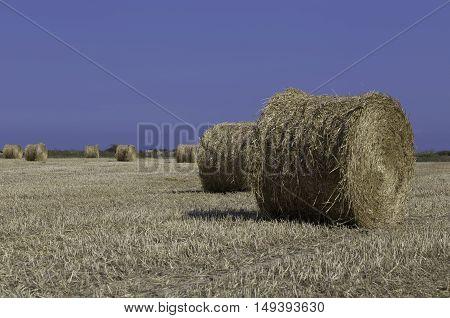 Harvesting the hay in Cyprus, hay rolls