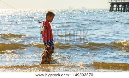 Connection between animals and kids concept. Sportive mixed race dog and boy kid playing together. Active child with puppy having fun.