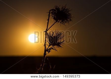 Plants silhouette against sunset. Village late summer life.