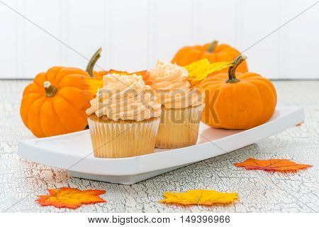Two pumpkin spice muffins on a plate with several pumpkins.