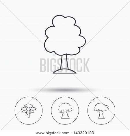 Pine tree, oak-tree icons. Forest trees linear sign. Linear icons in circle buttons. Flat web symbols. Vector