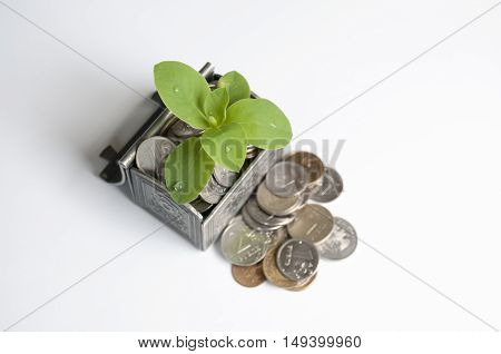 Herbs growing in the chest with coins