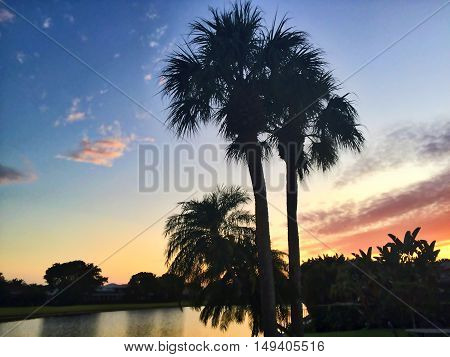 palm tree and sunset on the lake